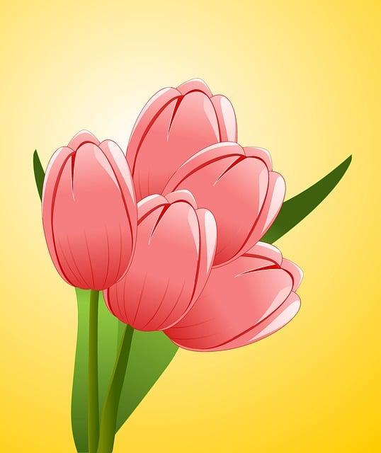 Tulips, Flowers, Bouquet, Celebration, Congratulations