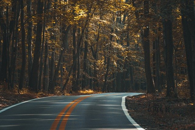 Asphalt, Conifer, Dark, Dawn, Fall, Guidance, Highway
