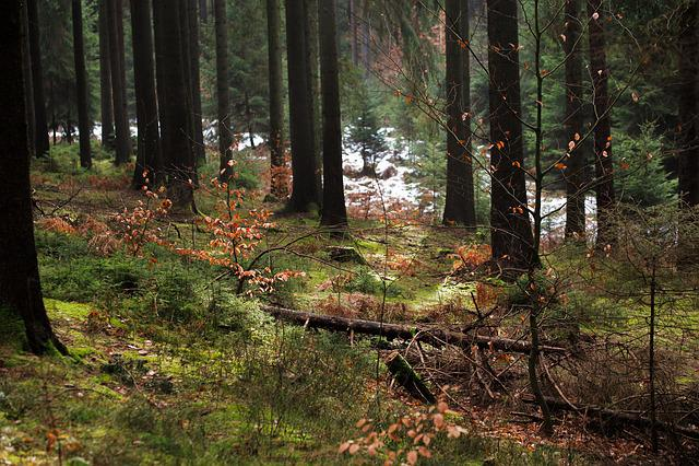 Wood, Tree, Nature, Landscape, Conifer, Environment