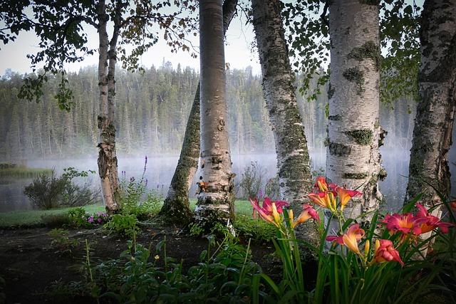 Landscape, Nature, Birch, Flowers, Fog, Coniferous