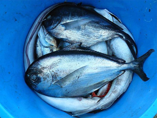 Fish, Seafood, Silver, Contrast, Close, Scale, Fishing