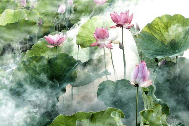 Flower, Lotus, Summer, Cool, Misty