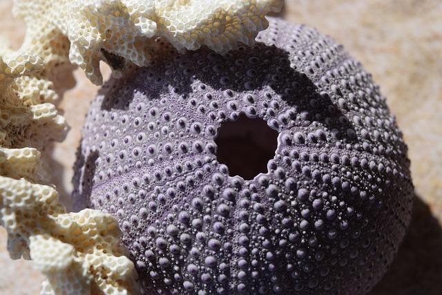 Sea Urchins, Coral, Sea, Sand
