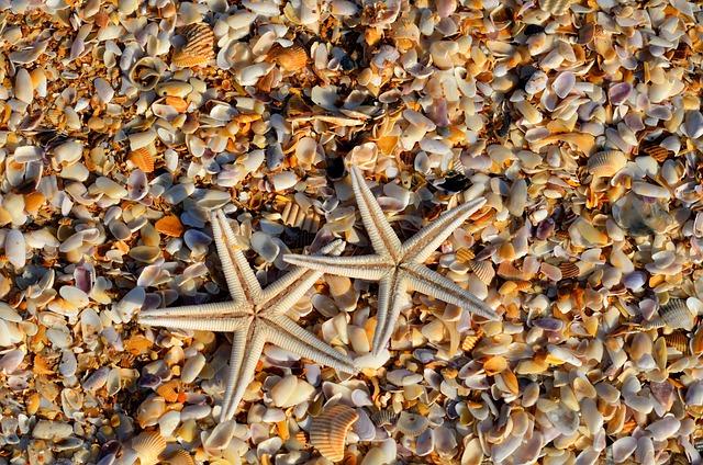 Starfish, Sea Life, Animal, Coral, Life, Marine, Ocean
