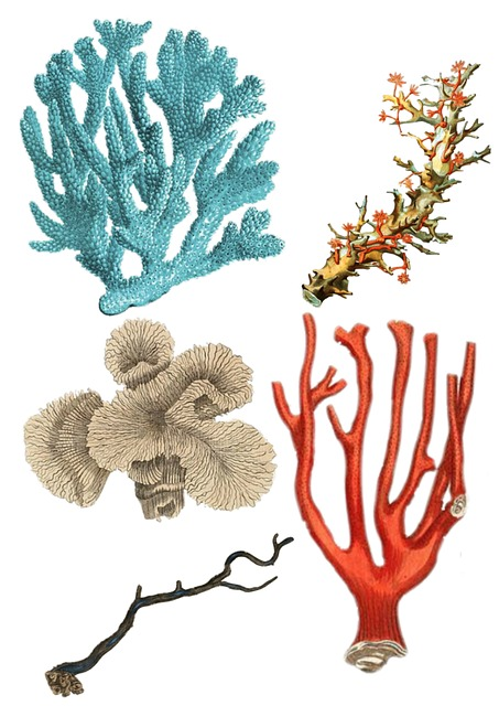Coral, Collage, Vintage, Plant, Blue, Red, Ocean, Life