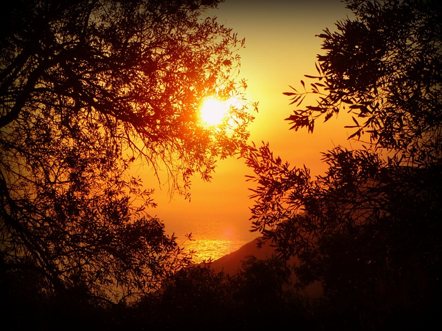 Sun, Sunset, Sea, Water, Corfu, Greece, Trees, Plants