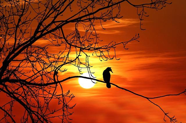 Bird, Cormorant, Sunset, Silhouette, Nature, Wildlife