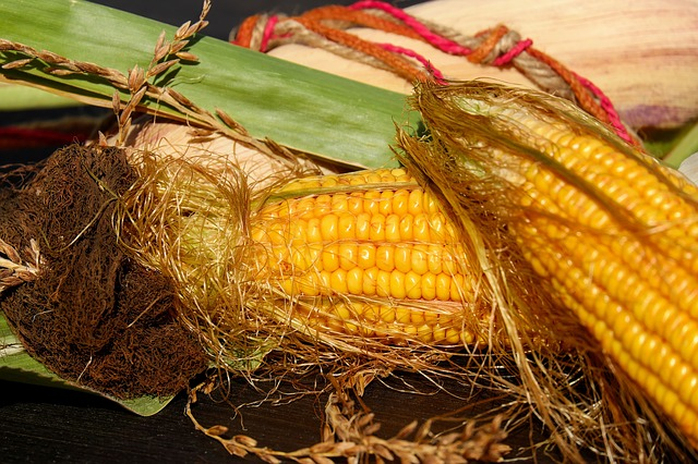 Corn On The Cob, Corn, Corn Hair, Autumn, Decoration