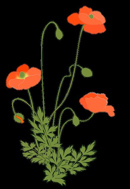 Poppy, Corn Poppy, Flowering Plant, Pink