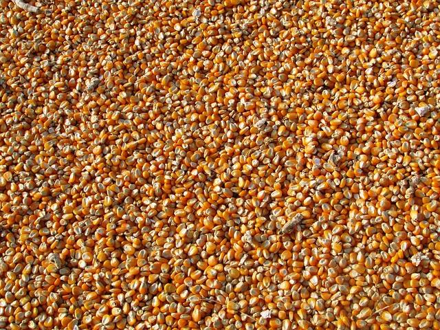 Corn, Kernels, Food, Maize, Grains, Seeds, Harvest
