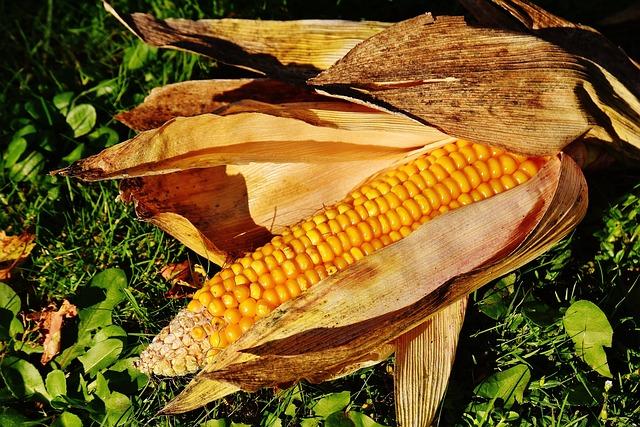 Corn, Corn On The Cob, Corn Kernels, Vegetables, Food