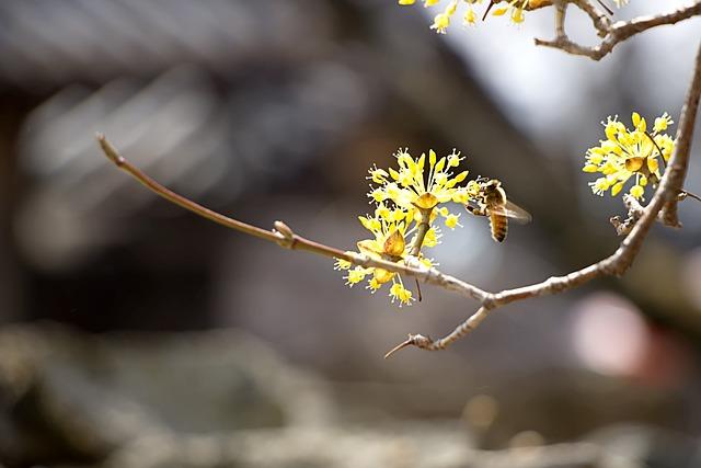 Cornus, Landscape, Nature, Spring, Flowers, Plants