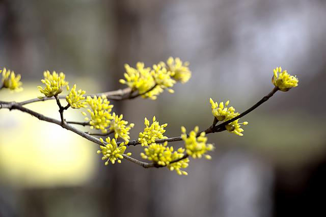 Cornus, Spring Flowers, Flowers, Nature, Landscape