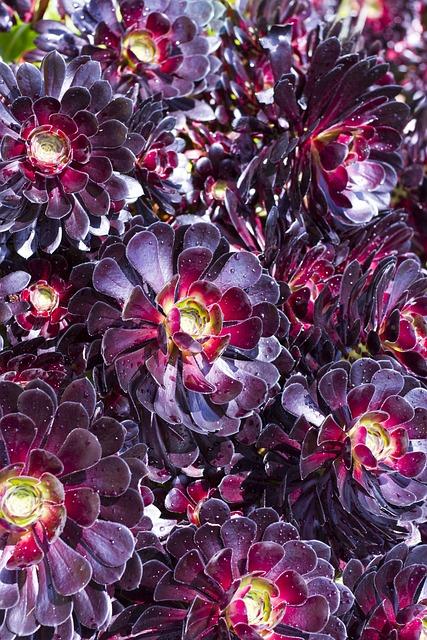 Flowers, Cornwall, Uk, England, Wildflower, Flora