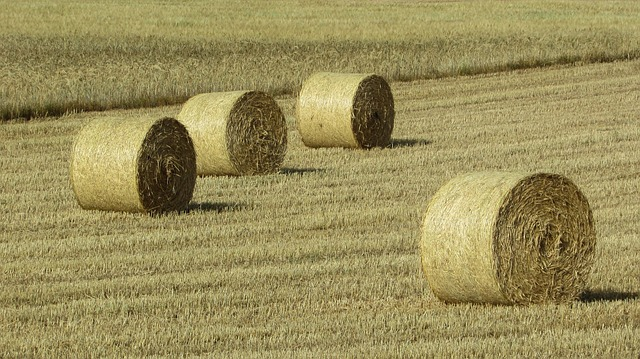 Forage, Dry Grass, Countryside, Agriculture, Field, Hay