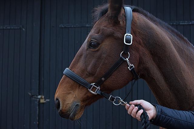 Animal, Horse, Ranch, Countryside, Animal-loving