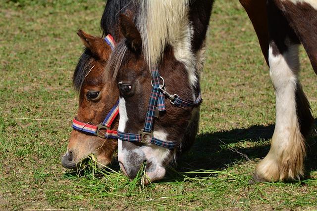 Horses, Coupling, Eat, Grass, Pasture, Graze, Paddock