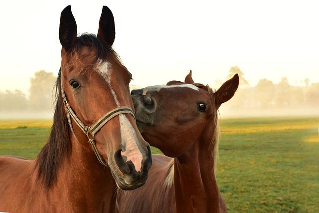 Horses, Kiss, Play, Affection, Coupling, Meadow
