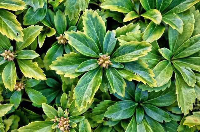 Succulent, Plant, Ground Cover Plant, Cover Plant