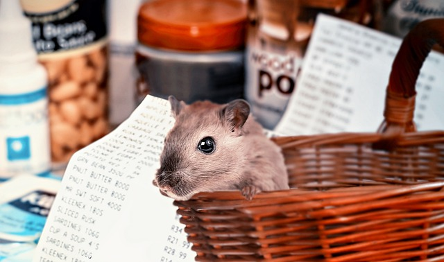 Hamster Shopping, Covid-19, Hamster Buying, Purchasing
