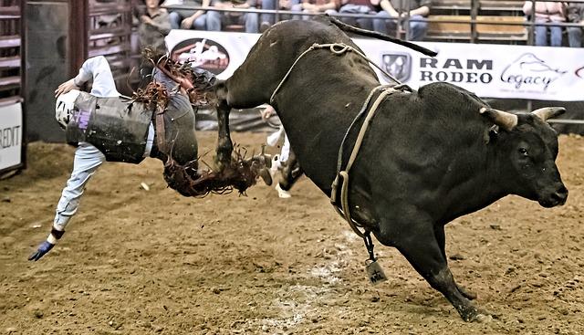 Bull, Bull Rider, Bull Riding, Rodeo, Cowboy, Western