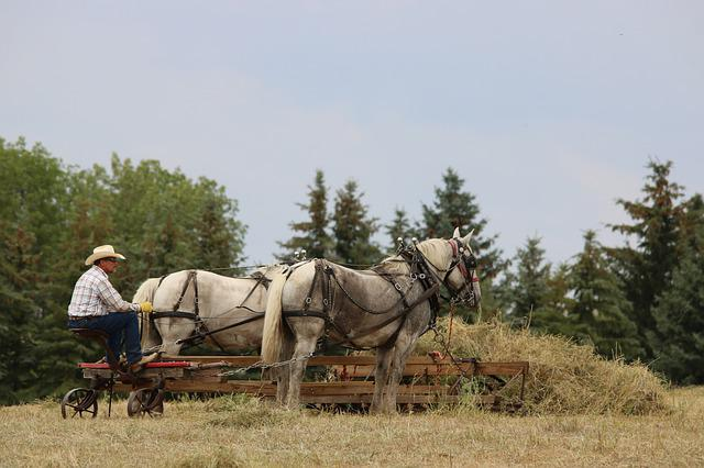 Horses, Cowboy, Farmer, Hay, Draft Team, Percheron