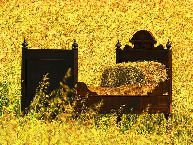 Bed, Cornfield, Sleep, Bed In The Corn Field, Cozy