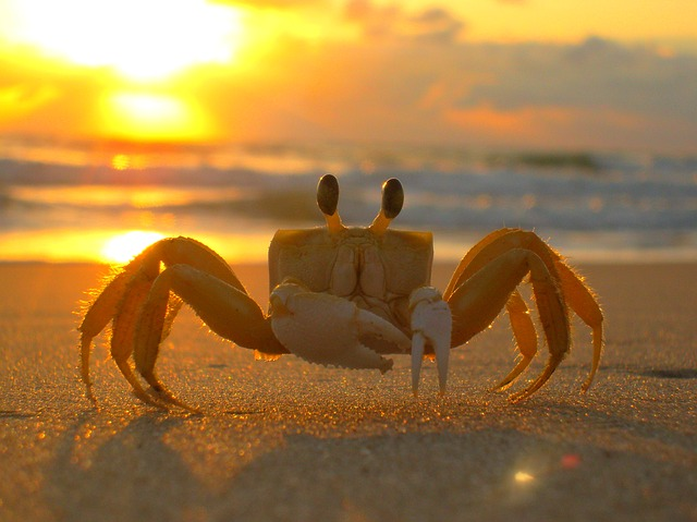 Siri, Beach, Crab, Mar, Sand, Sol