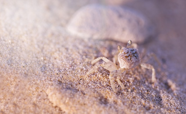 Crab, Sand, Nature, Macro, Texture, Outdoor, Animal
