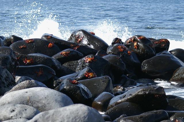 Crabs, Galapagos, Island, Tourism, Ecuador, Water