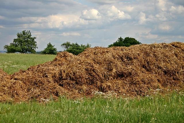 Dung, Crap Space, Crap, Agriculture, Haystack