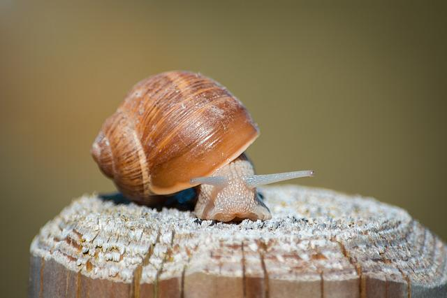 Snail, Shell, Mollusk, Nature, Animal, Slowly, Crawl