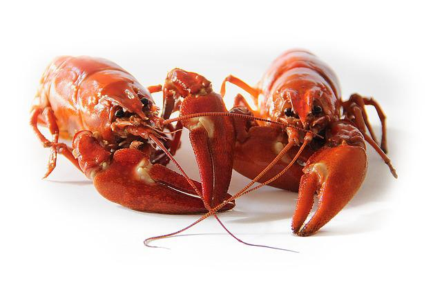 Crayfish, Sweden, Crayfish Party, Red, Canker, Seafood