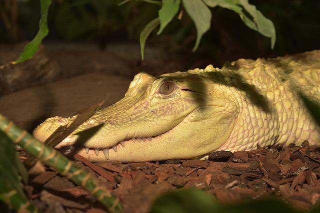 Reptile, Nature, Animal World, Animal, Lizard, Creature