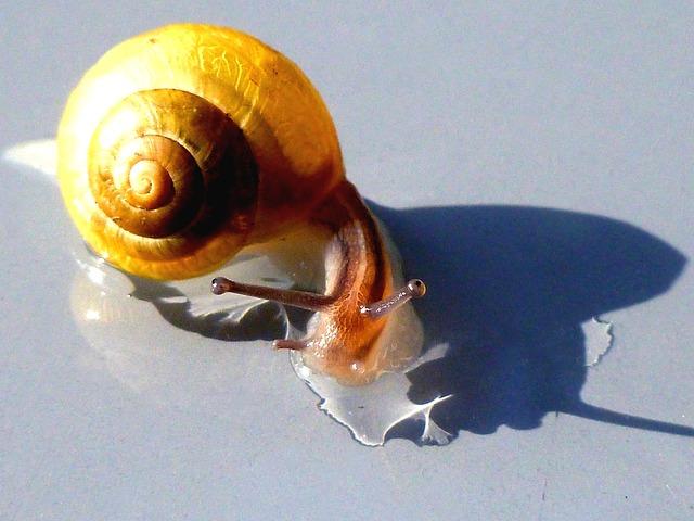 Snail, Shell, Probe, Mollusk, Nature, Creature, Close