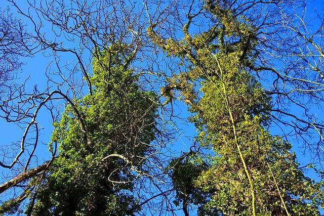 Tree, Trunk, Branch, Ivy, Ivy Grown Tree, Vine, Creeper