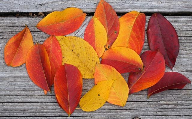 Autumn Palette, Crepe Myrtle Leaves, Crepe Myrtle