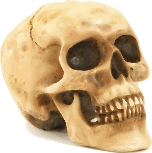 Skull, Anatomy, Bones, Death, Human, Kill, Rip, Crime