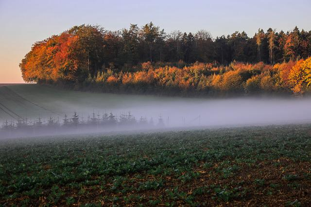 Autumn Landscape, Trees, Fall Foliage, Critter, Fog