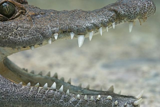 Crocodile, Philippines Crocodile, River, Freshwater