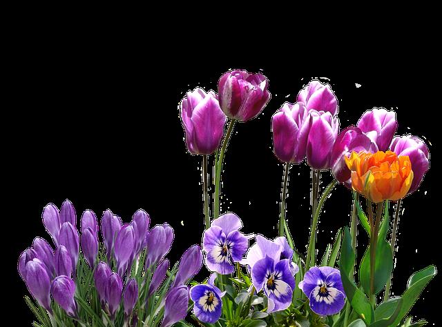 Spring, Tulips, Crocus, Pansy, Easter, Spring Flower