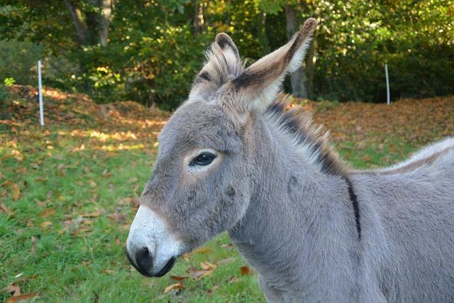 Donkey, Anon, Head, Profile, Croix Saint André, Animal