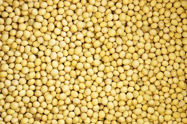 Bean, Pattern, Texture, Nature, Grain, Farming, Crop