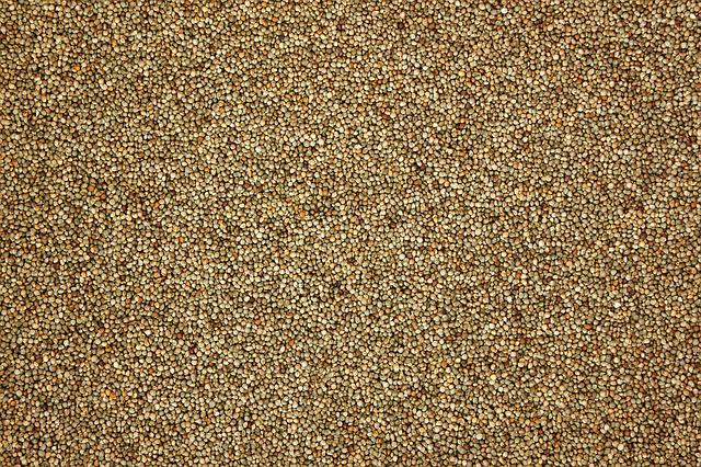 Perilla, Pattern, Texture, Nature, Grain, Farming, Crop