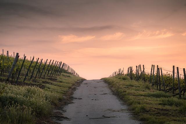 Crops, Dawn, Road, Path, Farm, Fences, Farmland, Rural