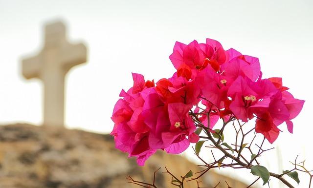 Cross, Monastery, Pink, Flower, Greece