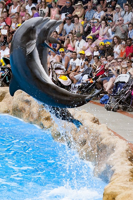 Crowd, Dolphins, Dressage, Group Of People, Zoo