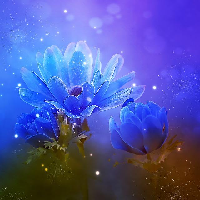 Anemone, Crown Anemone, Blue, Blue Anemone, Flower