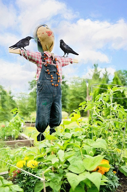 Scare Crow, Crows, Garden, Bird, Decoration, Raven