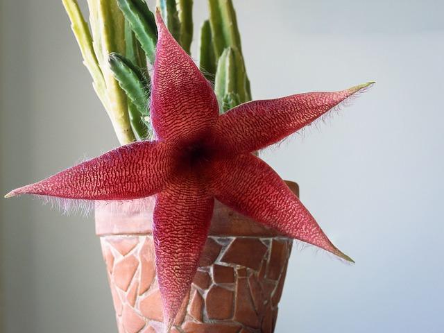 Cactus, Flower, Flowering Cactus, Red, Cthulhu